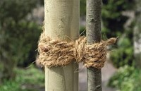 boomband kokos-7,  75 m/ rol - per rol-2