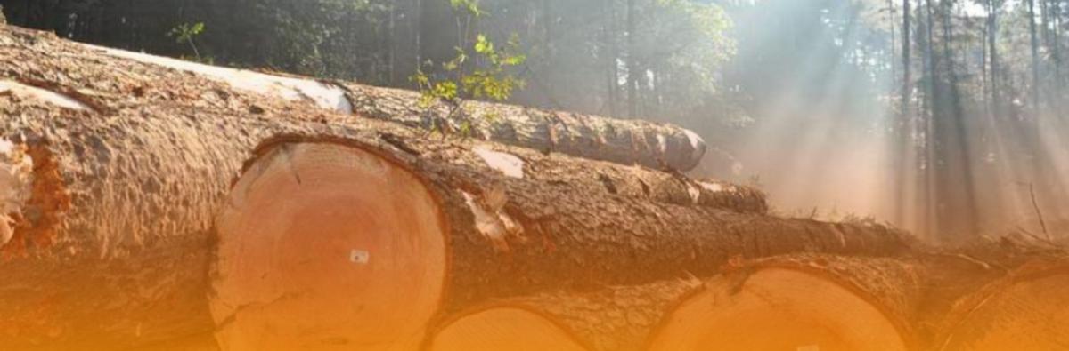 Houd rekening met hout!
