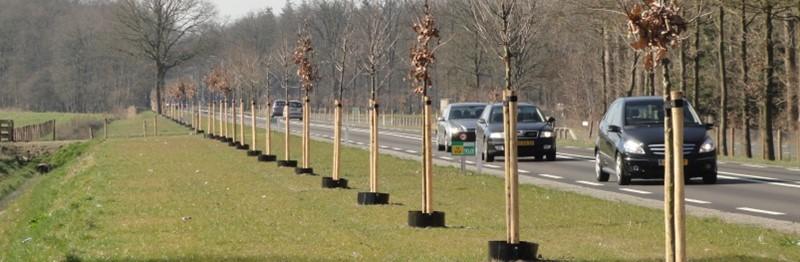 Boomwortelwering: de oplossing voor gecontroleerde boomwortelgroei