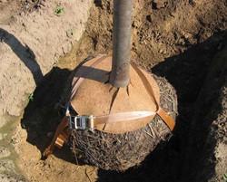 GGB ondergrondse kluitverankering met grondankers voor stamomtrek tot 20 cm