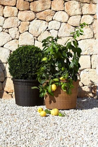 Cane-line Botanic plantenbak - mocca