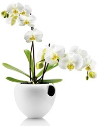 Eva Solo orchideeenpot , wit