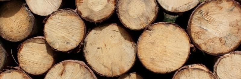 Verschillende houtsoorten op een rij